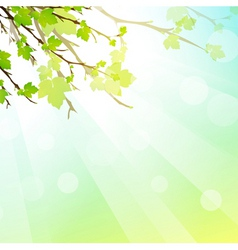 leaves and sun vector image vector image