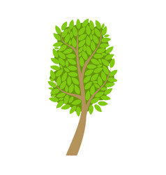 Tree with an oval crown and green leaves element vector