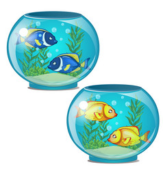two aquariums with tropical fish and seaweed vector image vector image