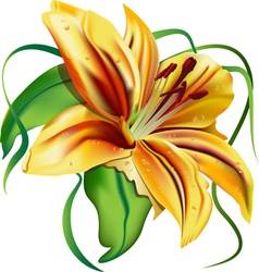 Beautiful lily vector