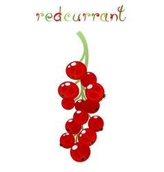 Red currant berry vector