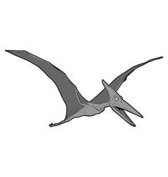 pteranodon vector image