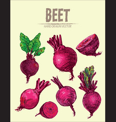digital detailed line art color beet vector image vector image
