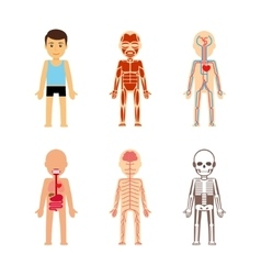 Body anatomy vector