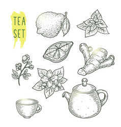 Sketch of tea elements include teapot cup mint vector