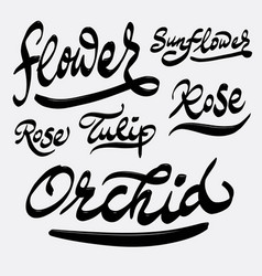 flower and orchid hand written typography vector image