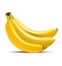 realistic detailed fruit banana vector image