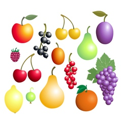 Fruits And Berries Collection vector image vector image