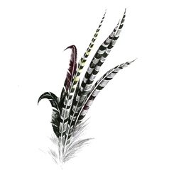 Black and white feathers isolated on white vector
