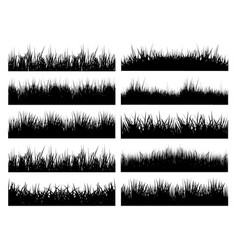grasses vector image