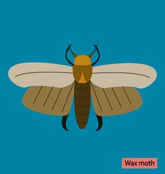 Wax moth vector