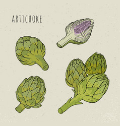 Artichoke set hand drawn botanical isolated and vector