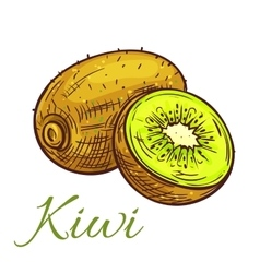 Kiwi fruit with juicy slice isolated sketch vector