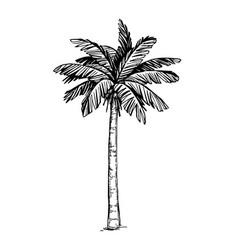 Coconut palm tree vector