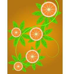 Orange vine vector