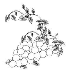Black silhouette with bunch of grapes vector