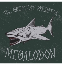 Vintage label with shark-Megalodon vector image vector image