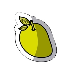 Isolated mango fruit design vector