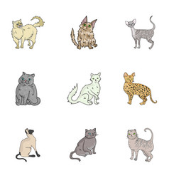 collection of cats in one picture different cats vector image