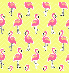 beautiful seamless pattern with flamingo vector image vector image