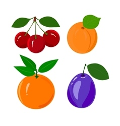 Set of juicy ripe fruit isolated on a white vector image vector image