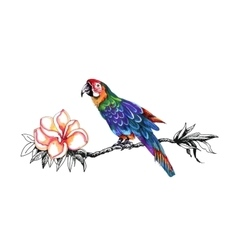 Beautiful colorful parrot on twig vector