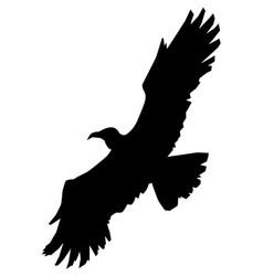 Eagle king of birds vector