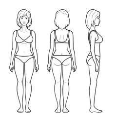 a female figure vector image