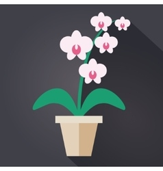 Flat style houseplant orchid vector