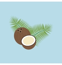 Coconut fruit icon vector
