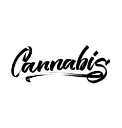 cannabis modern calligraphy hand lettering for vector image