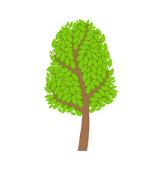 season tree with green leaves element of a vector image