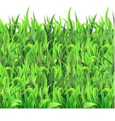 Horizontal seamless pattern green grass vector