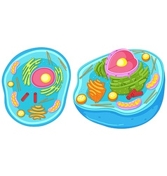 Animal cell in closer look vector