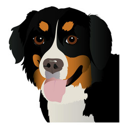 bernese mountain dog close up vector image vector image
