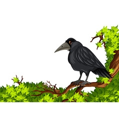 Crow standing on branch vector image
