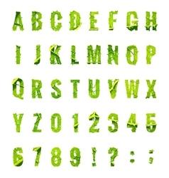 Green leaf lettuce alphabet EPS 10 vector image