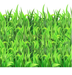 Horizontal seamless pattern green grass vector