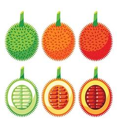 Set of gac fruit health benefits vector