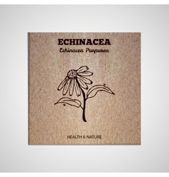 Herbs and spices collection - echinacea vector