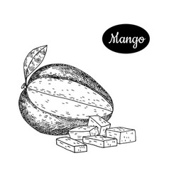 hand drawn sketch style fresh mango vector image