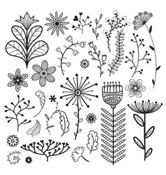 Nature collection with flowers branches and vector