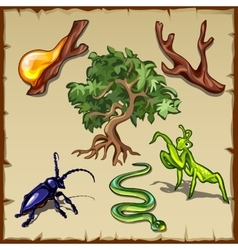 Plants insects and all sorts of other creatures vector