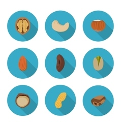 flat icons nuts vector image