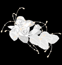 White roses isolated on black vector image
