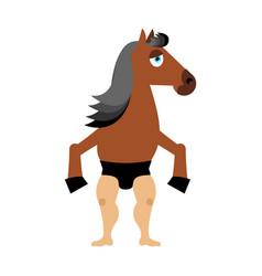 Centaur fairytale creature man horse isolated vector