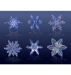 real snowflakes vector image