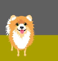 Pomeranian vector image