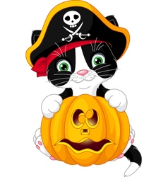 Pirate kitten vector