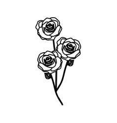 Sketch silhouette bouquet roses floral icon vector